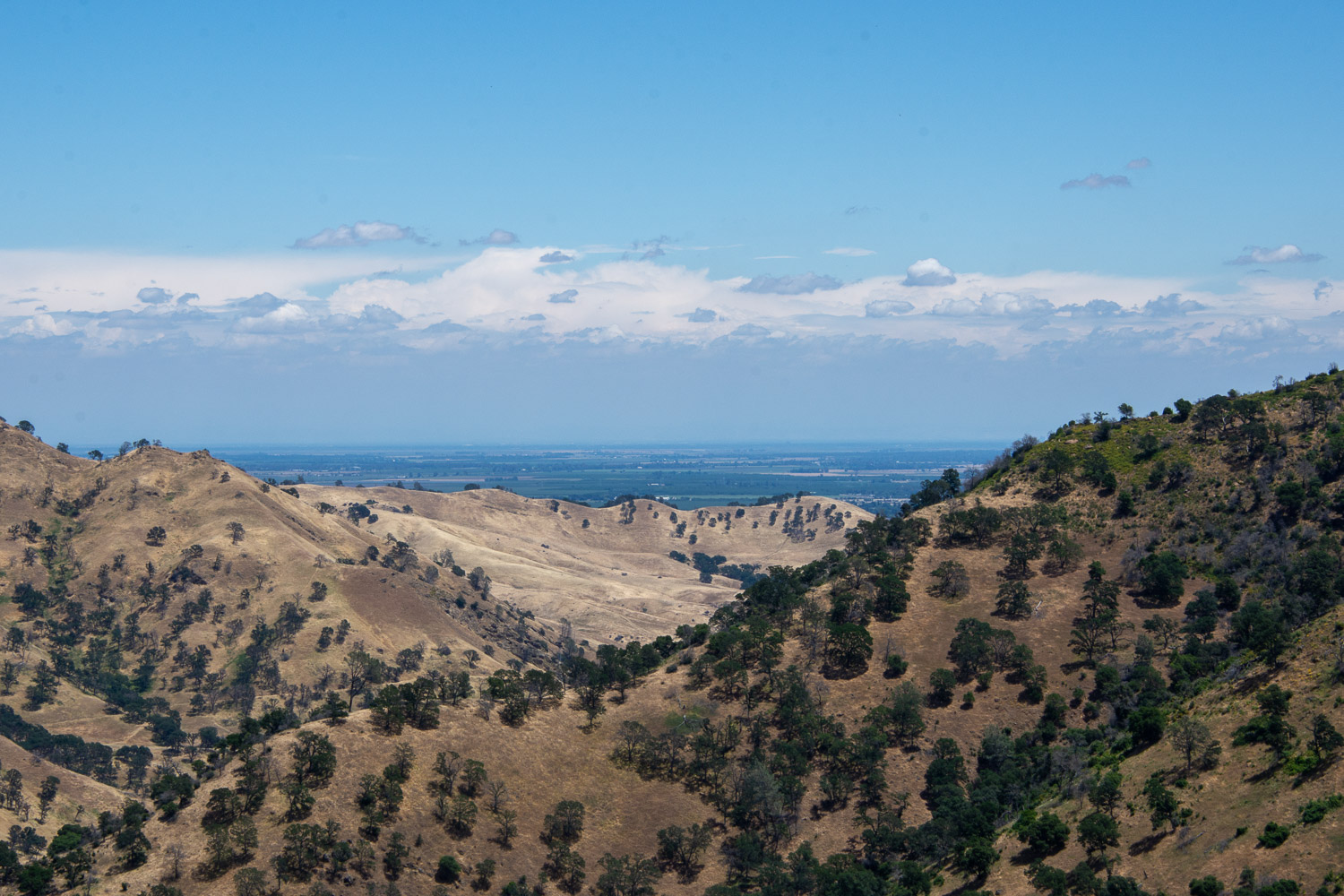 A view of the Central Valley from Stebbins Cold Canyon