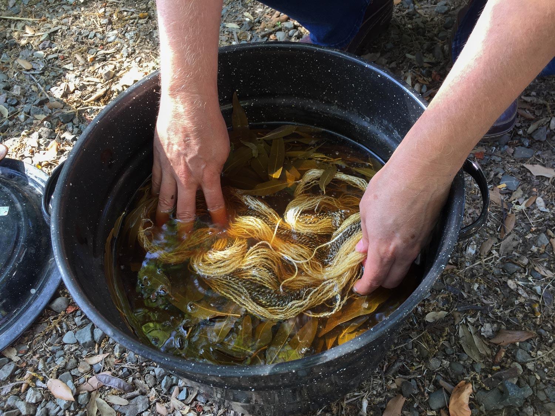 Dye pot at Meridian Jacobs farm day.