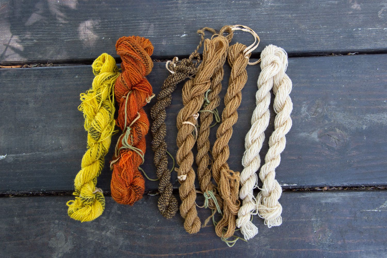 Freshly dyed Jacob yarn, dyed with natural dyes.