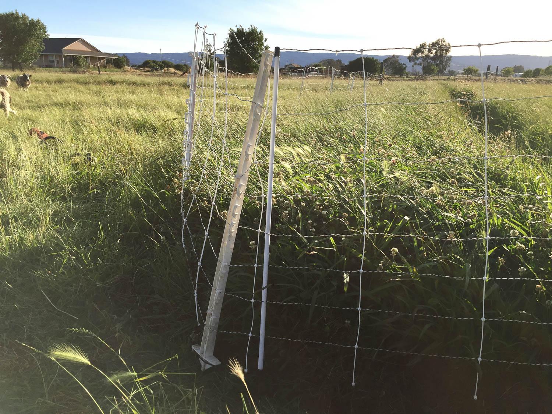 Clover in pasture