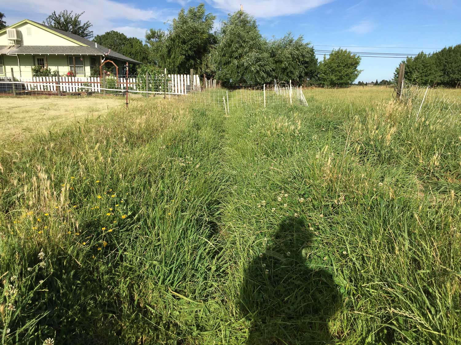 Irrigation ditch full of weeds