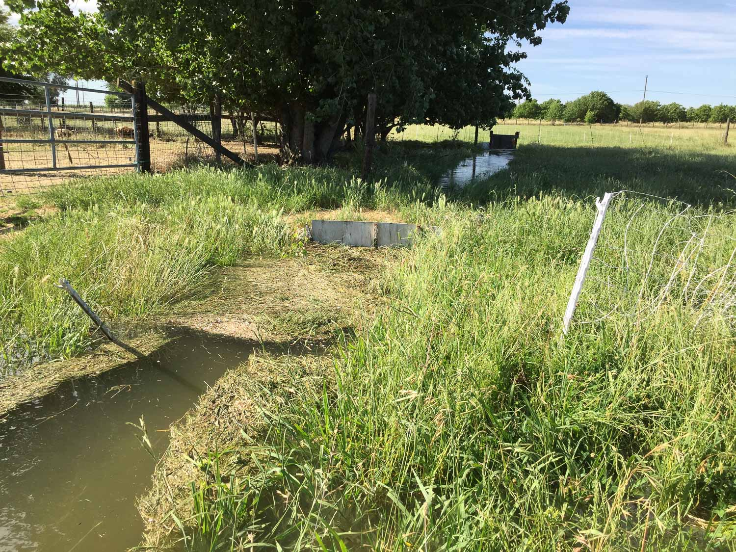 Weeds in irrigation ditch.