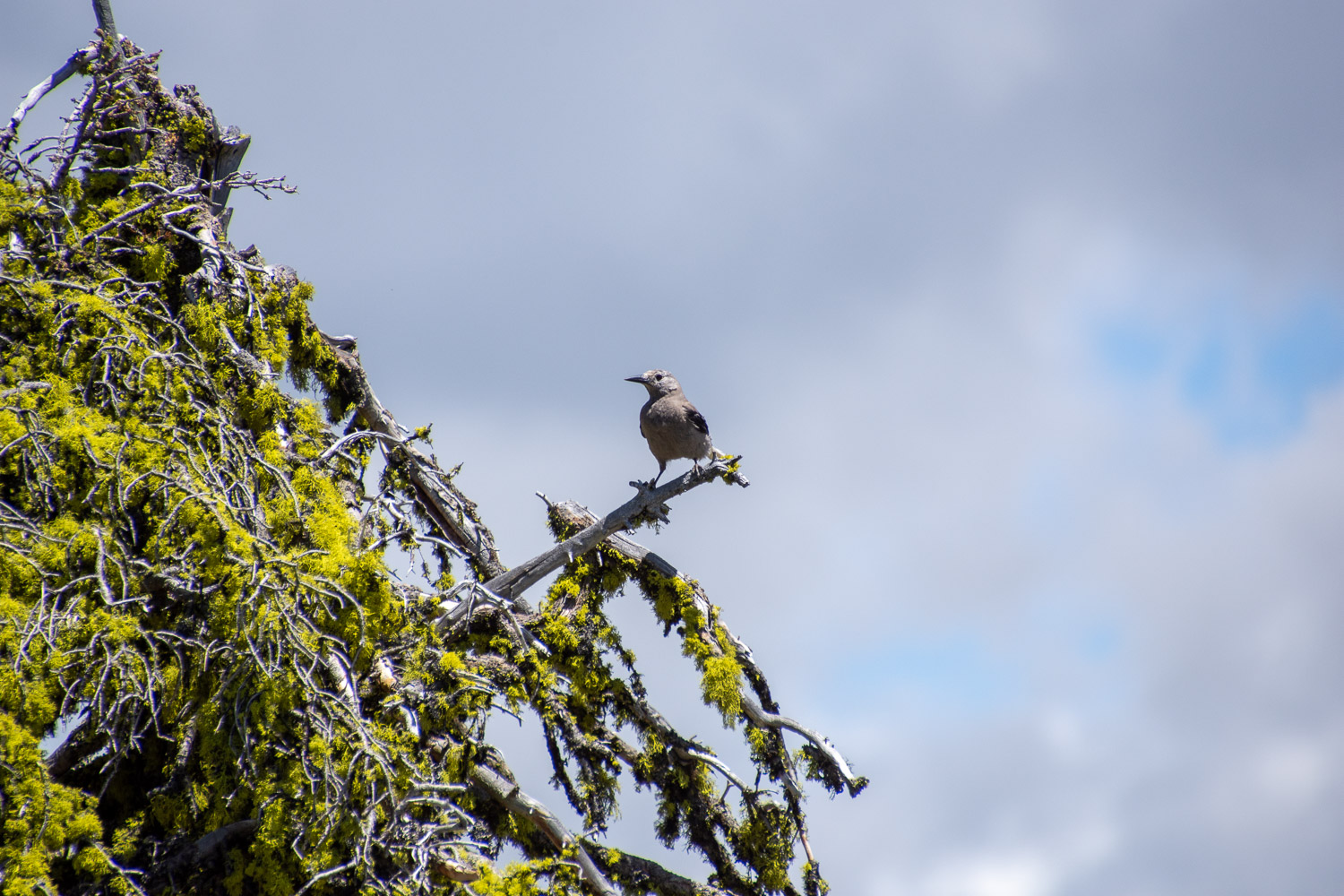 Bird in Payette National Forest.