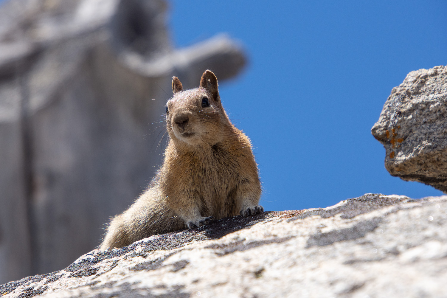 Chipmunk in Payette National Froest, Idaho.