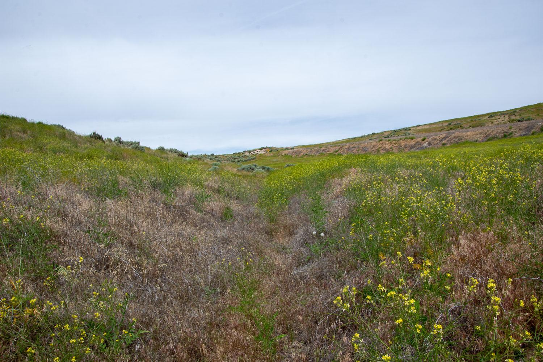 Oregon Trail near Keeney