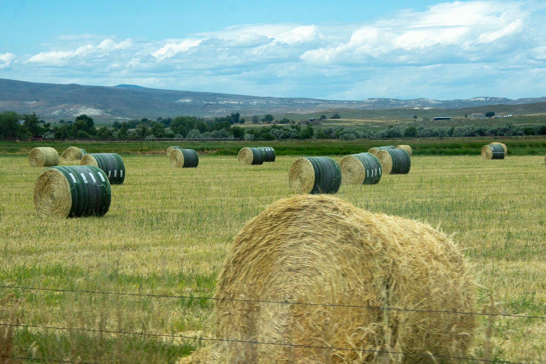 Hay in eastern Oregon