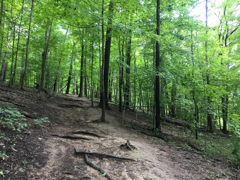 Trail to Brandywine Falls