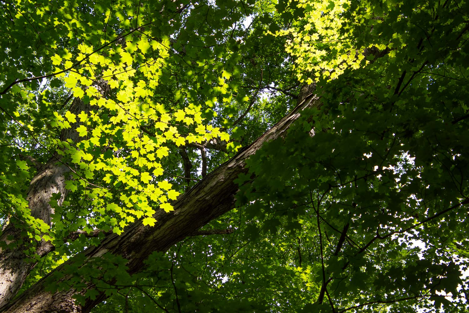 Forest trees in Cuyahoga Valley National Park