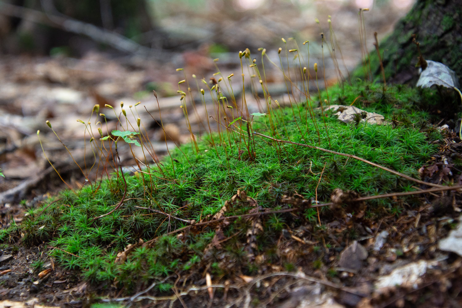 Moss in Mohican State Park, Ohio.
