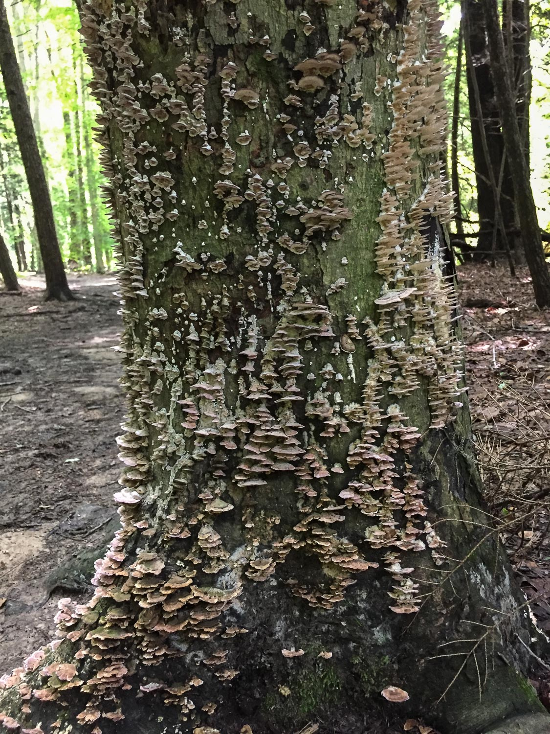 Mushrooms at Mohican State Park, Ohio