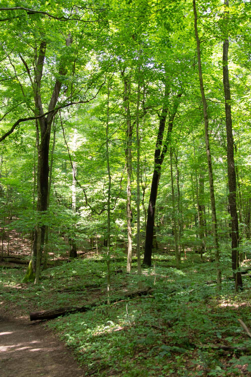 Forest trail in Mohican State Park in Ohio.