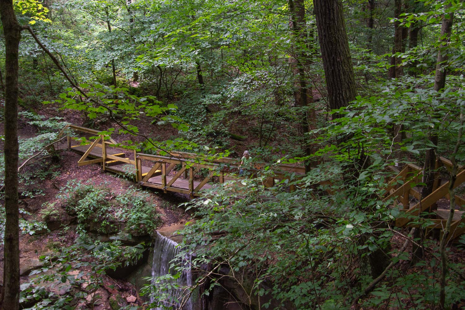 Forest Trail in Mohican State Park