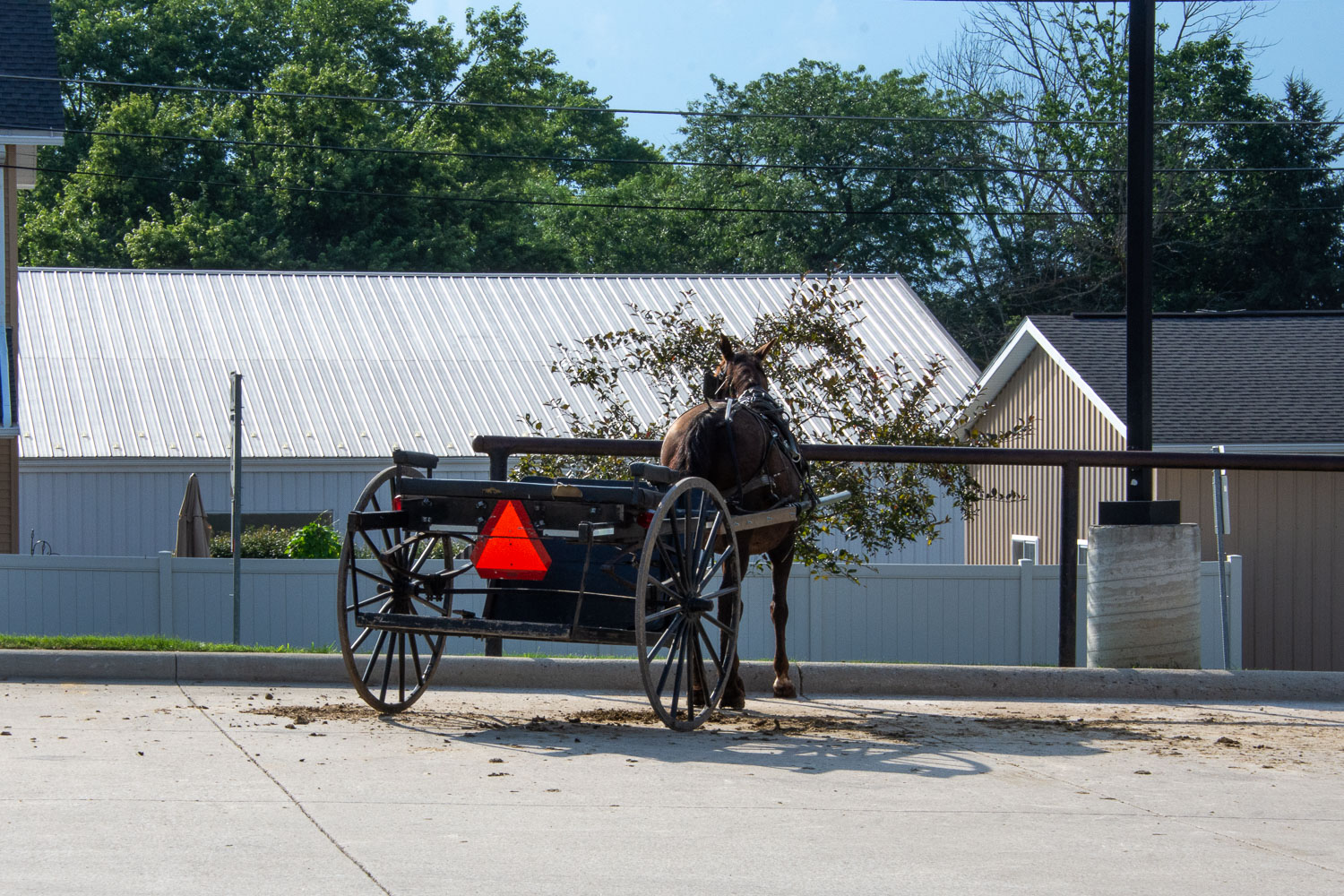 Horse and wagon in Homes County, Ohio.