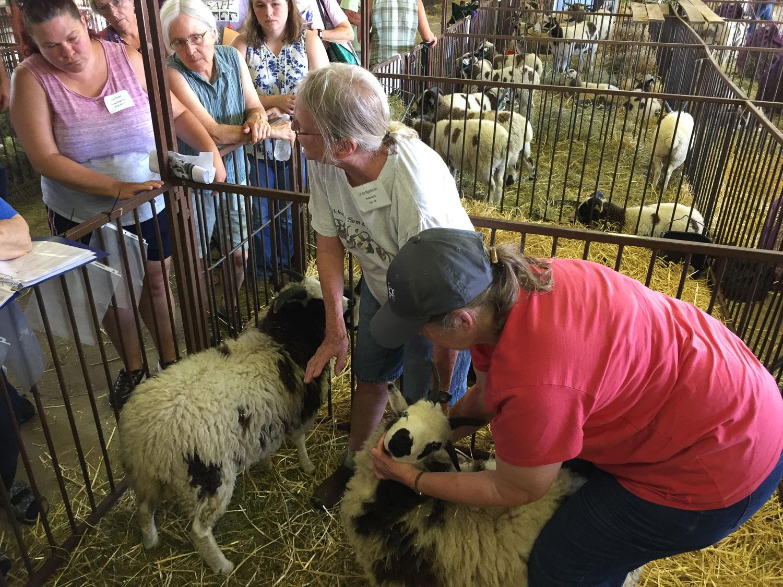 Jacob sheep breeders AGM