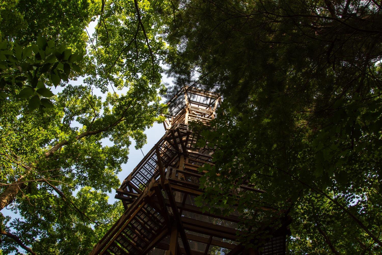 Emergent Tower at Holden Arboretum, Ohio.