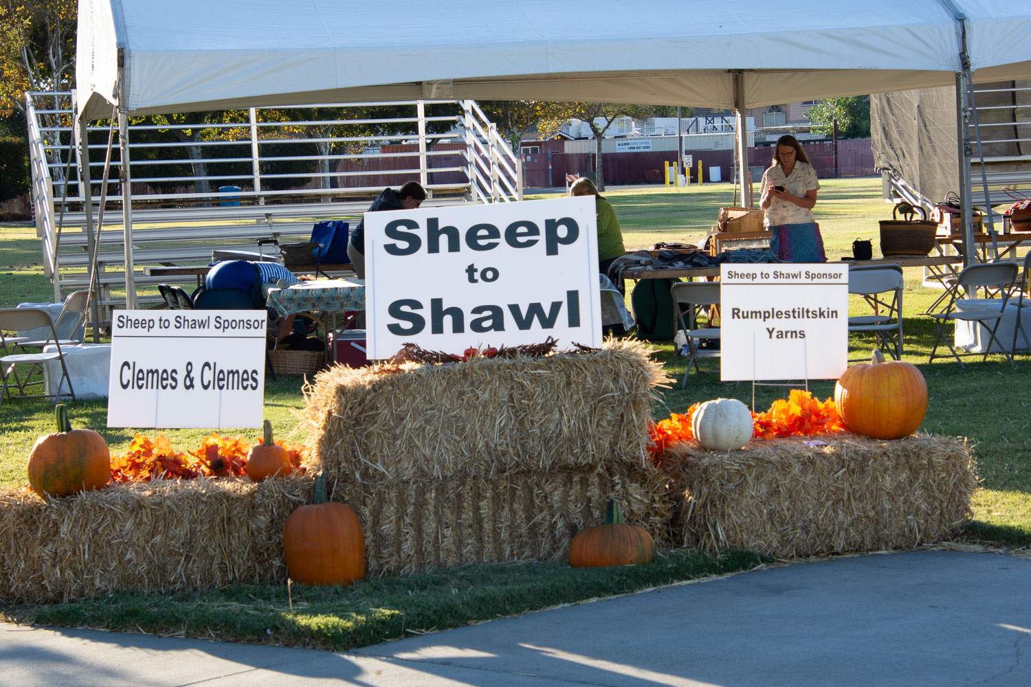 Sheep to shawl tent at Lambtown