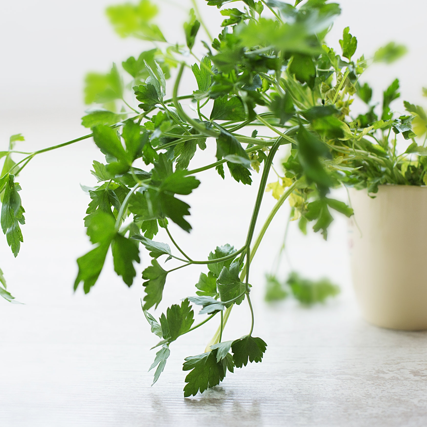 Tip #43The Herb Saver - Fresh herbs last longer when kept dry. Wrap your herbs in a clean towel before bagging and placing in the fridge. Can extend the life of herbs like parsley, mint, rosemary or cilantro for days or weeks.