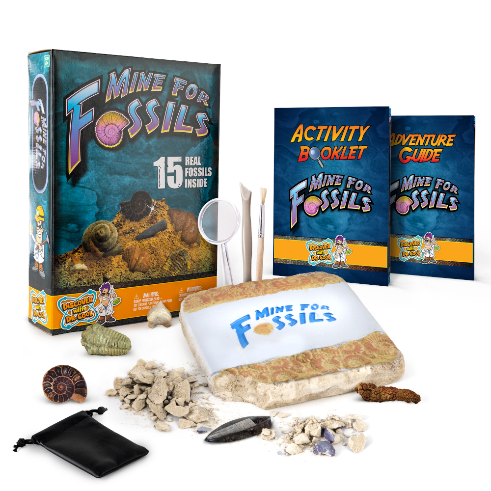 Real fossil dig kit