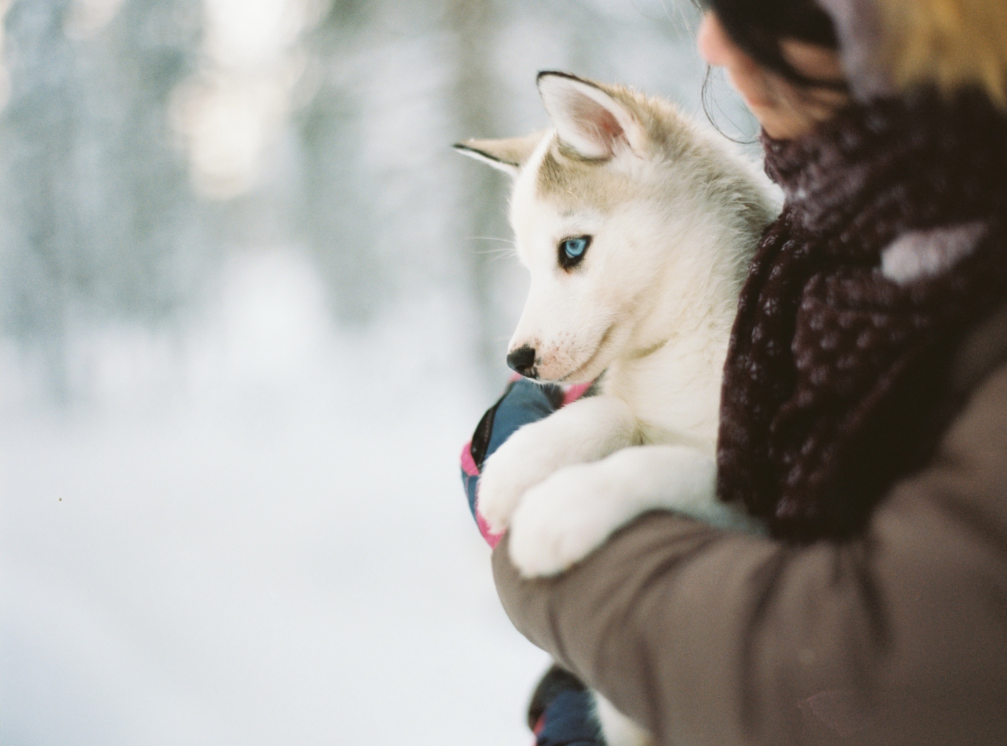New Experiences Puppy Training Denver