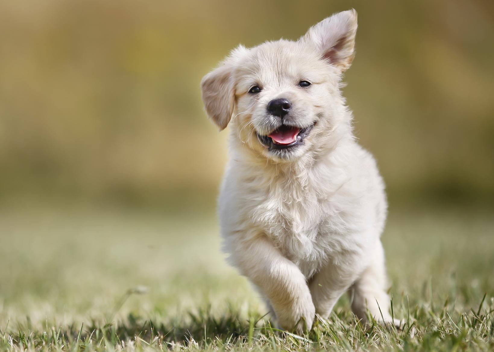 Recall Puppy Training Denver Family Pupz