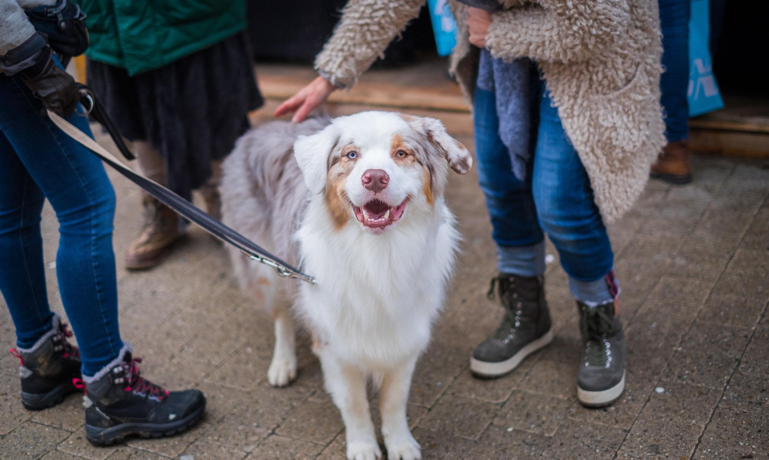 Puppy Socialization Denver Family Pupz
