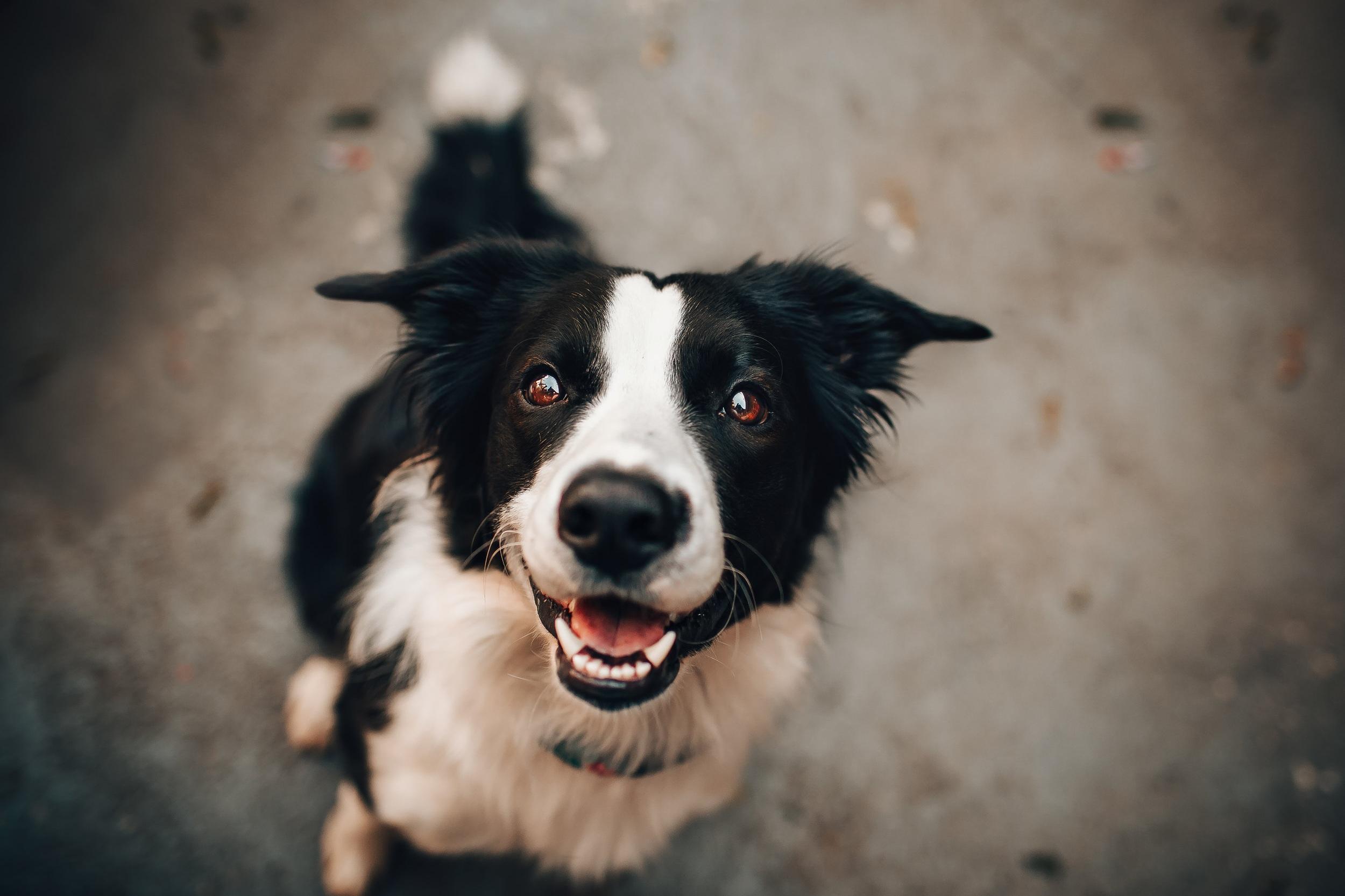 how to speak dog family pupz.jpg