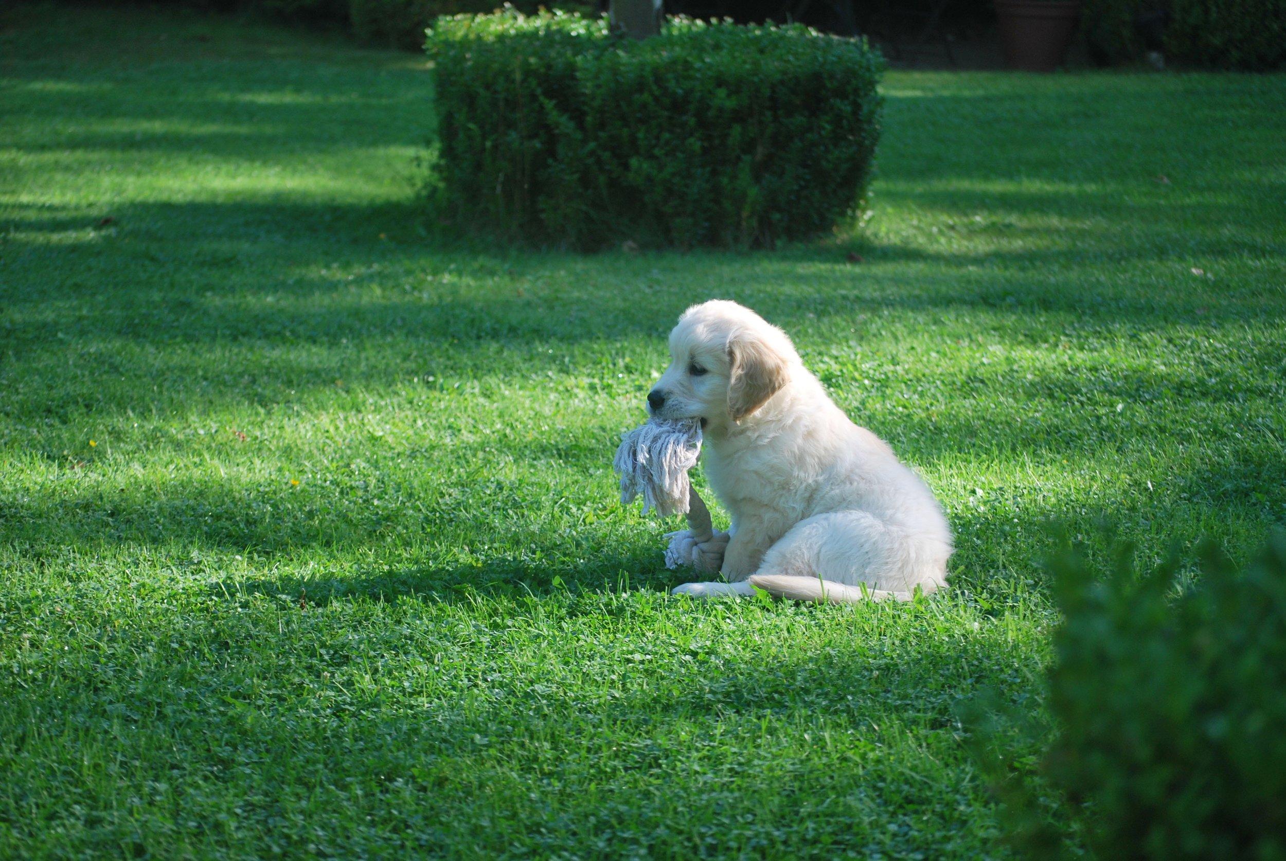 puppy sosialization .jpg