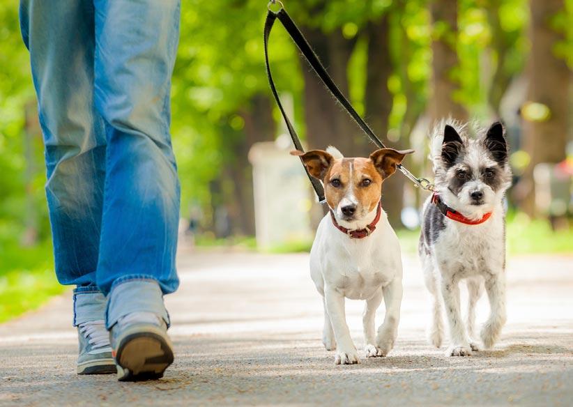 teach your dog to walk nicely on leash.jpg