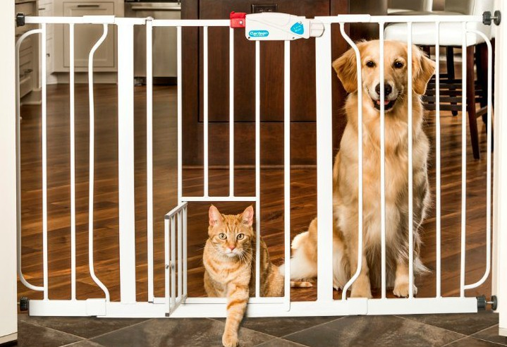 Using management options, such as baby gates, prevents the dog from practicing the unwanted behavior - jumping up on guests.