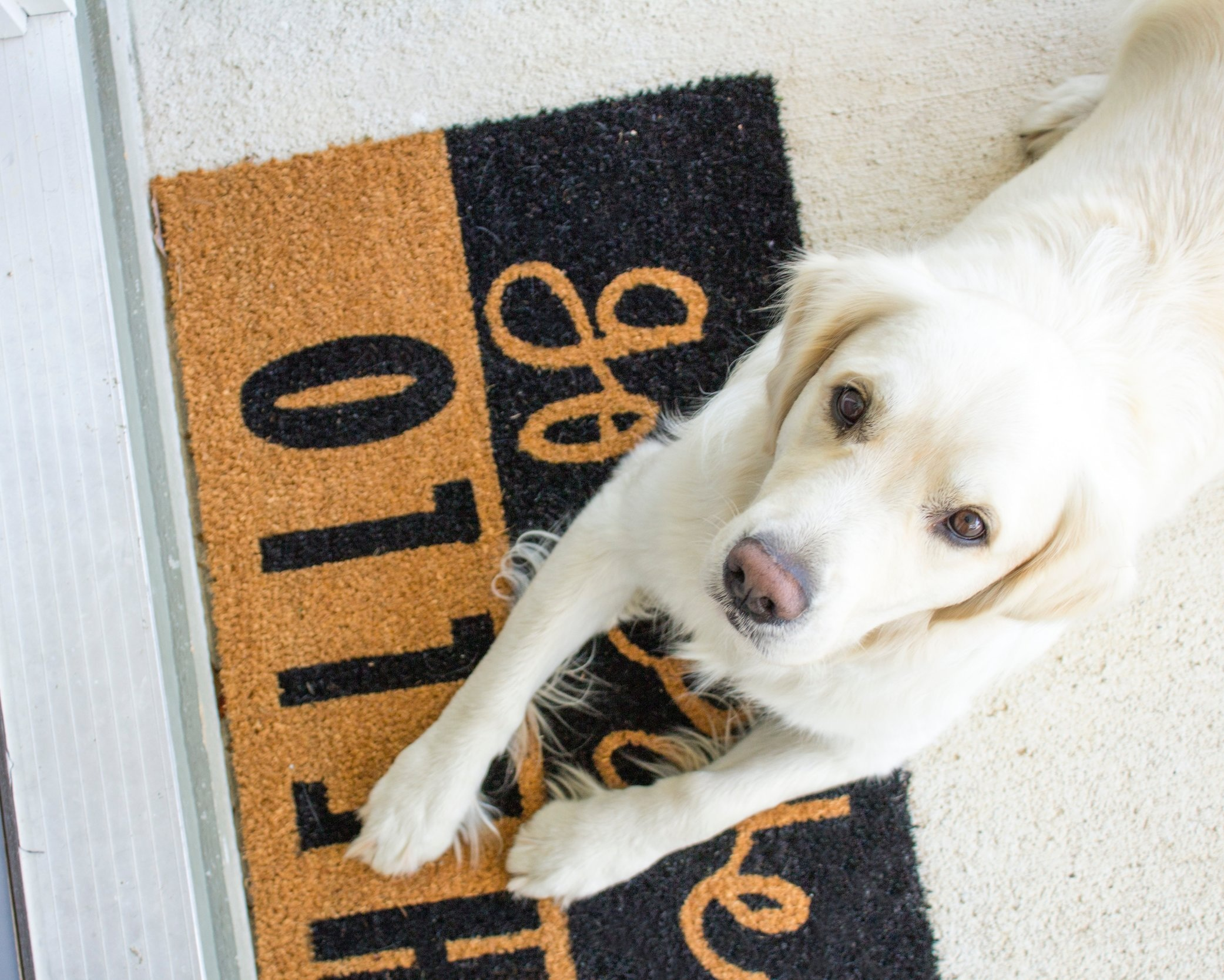 Teach your dog where to go and what to do when guests arrive.