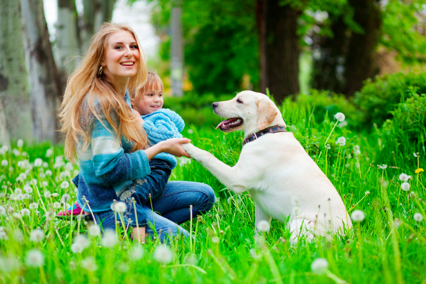 Dog Training & Support For Families With Toddlers in Denver. Family Pupz