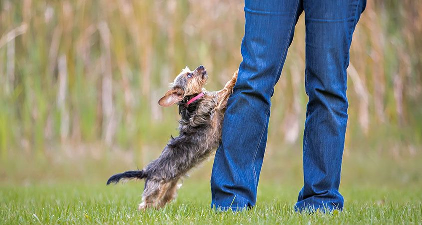 How-to-stop-dog-from-jumping-on-guests.jpg