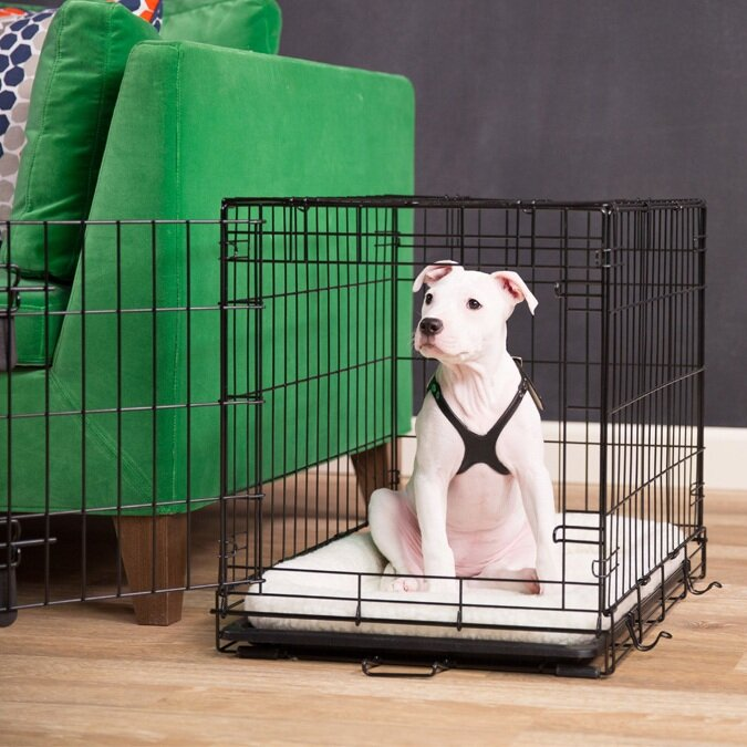 How To Crate Train Your Puppy Family Pupz