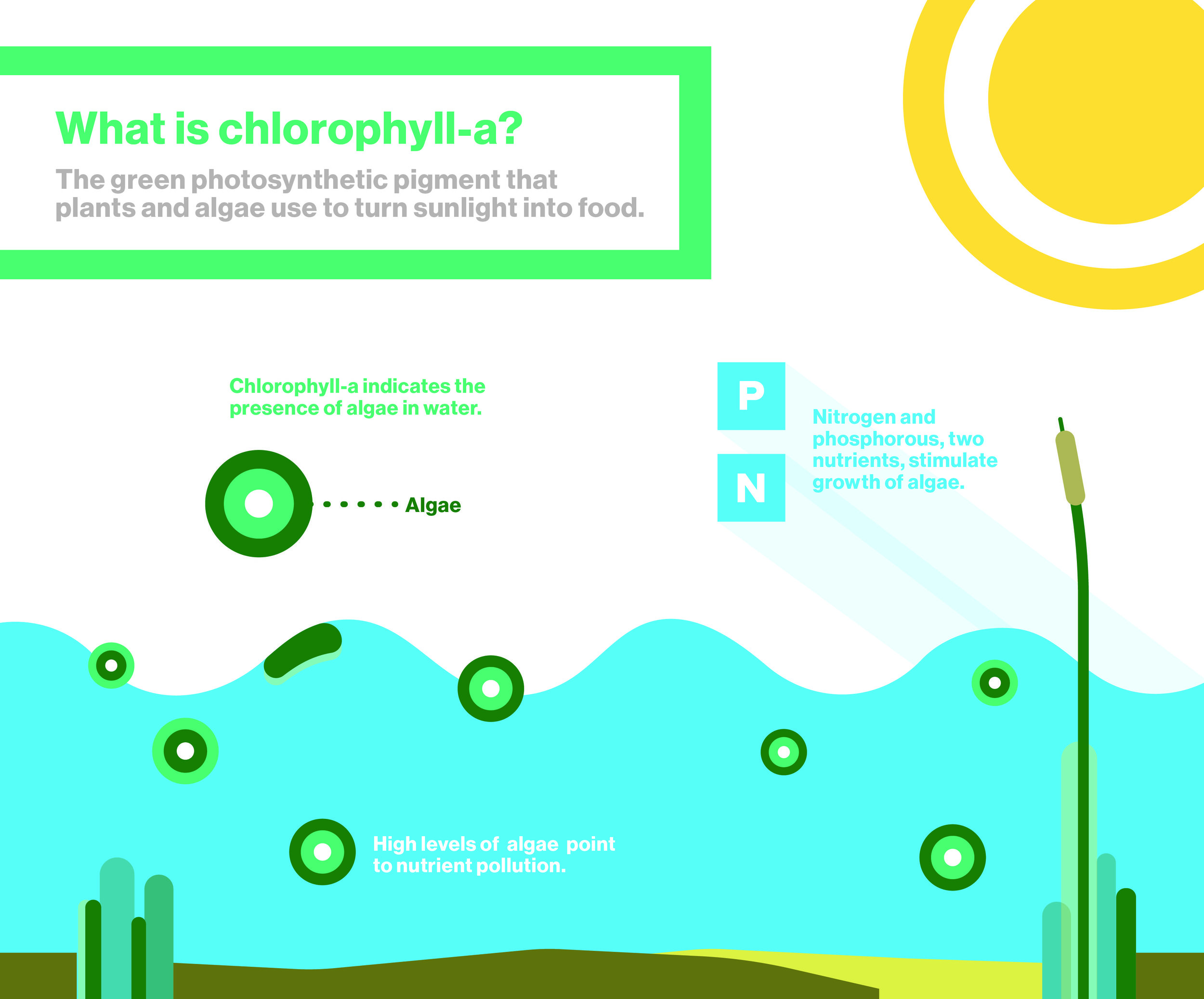 What is chlorophyll-a?