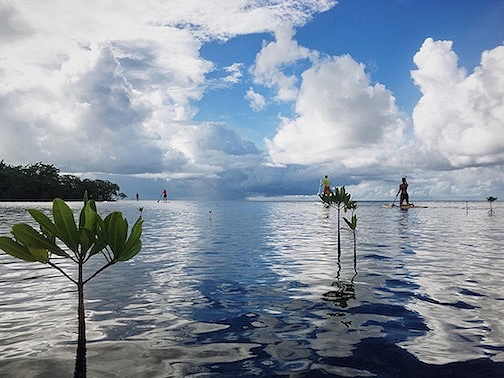 Do you like water activities? Try Paddle boarding in Guadeloupe through mangrove and other locations with Surf Gwada. We speak English in Guadeloupe, but can also accommodate Russian and French if you need. Make your dreams come true!