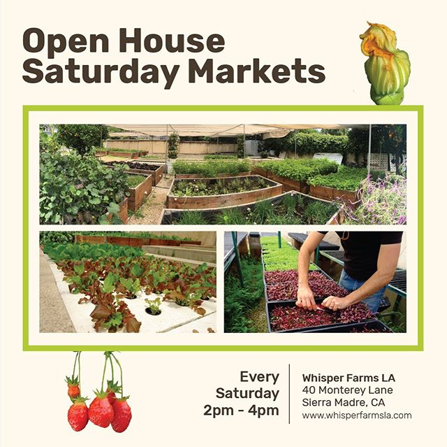 Come and tour the garden and check out this Saturday's harvest at our farm stand.  Hope to see you there! #backyardfarm #veggies #microgreens #herbs #foodforest #urbanfarm #farmstand #sierramadre #harvest #marketgarden #growathome