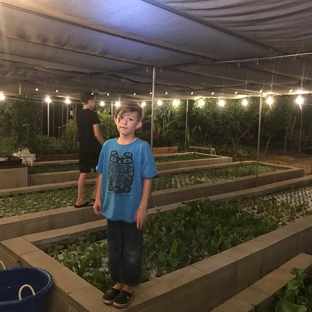 When you have to fertilize the garden but the boys want to jump on the trampoline.  I'll be done in just five more minutes! #areyoudoneyet #fertilize #growgreens #herbs #veggies #backyardfarm #vegetables #backyardgarden #garden #nightgardening #homegarden #marketgarden #gojump