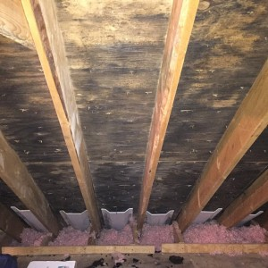 Roof Leaks Los Angeles - moldy attic