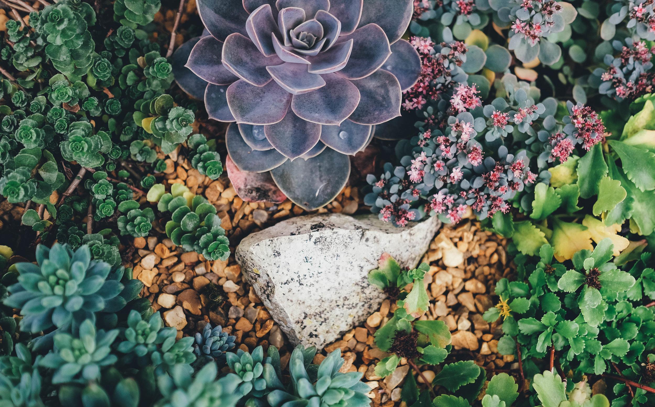 drought landscape succulent modern design