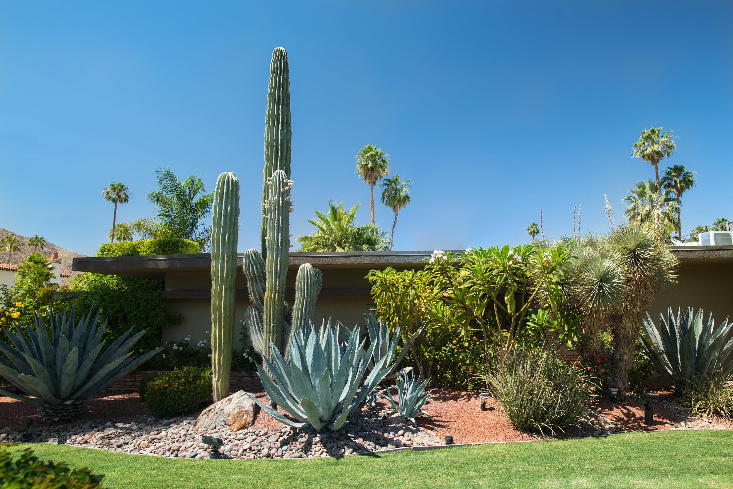Succulent landscape design LA