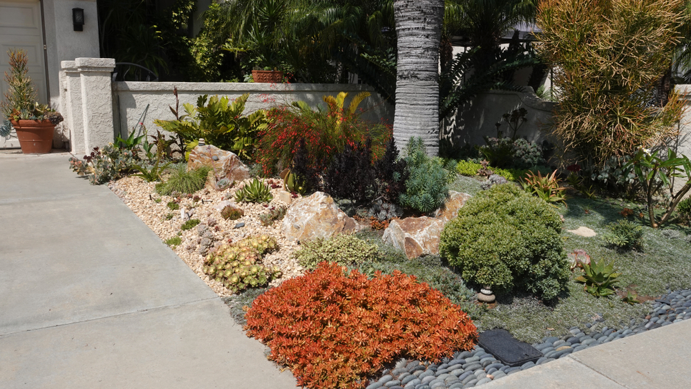 Drought landscaping in Burbank