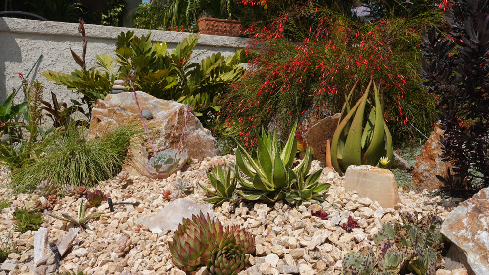 drought tolerant landscape contractor in Woodland Hills, CA