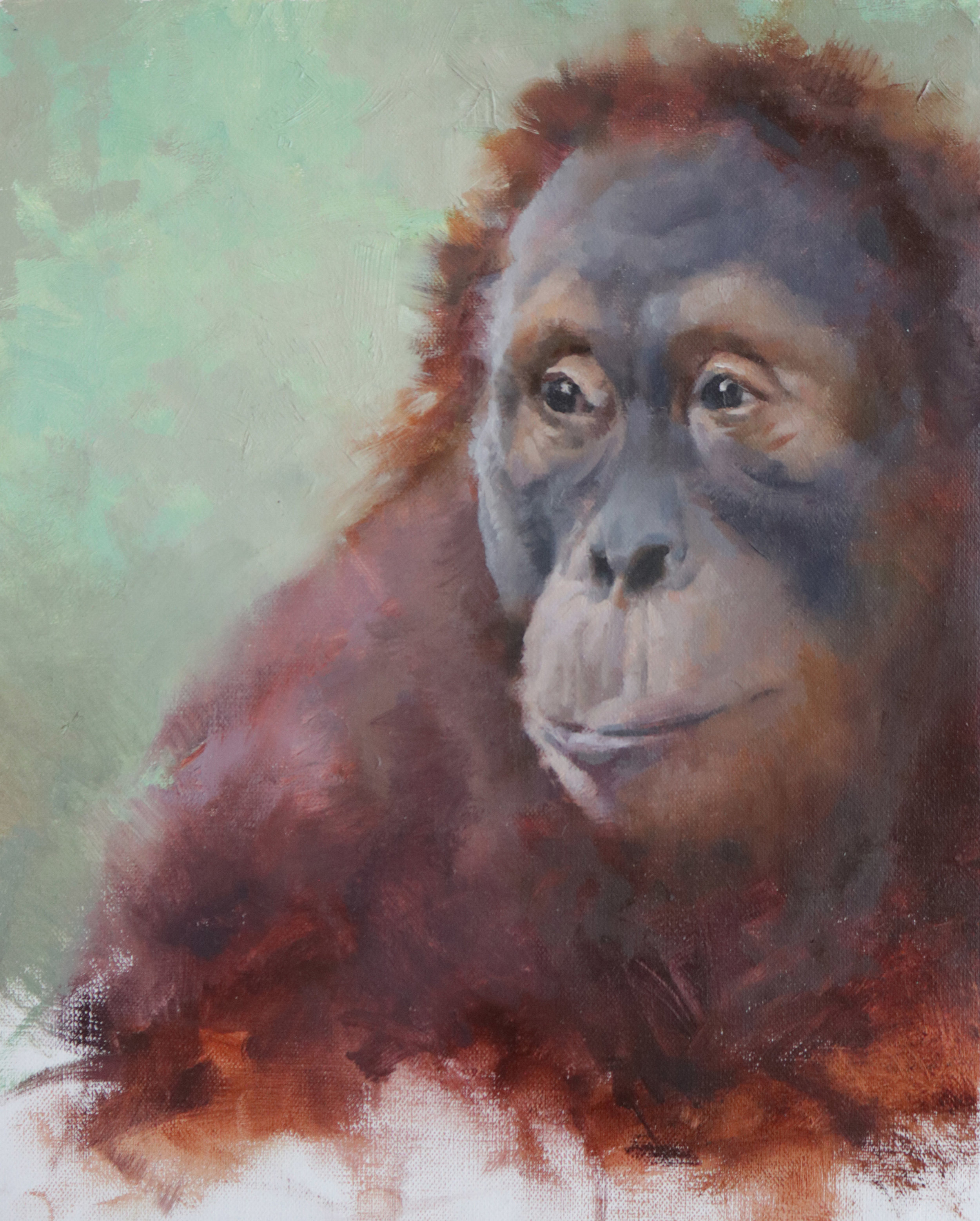 "Female Orangutan Portrait 9""x12"""