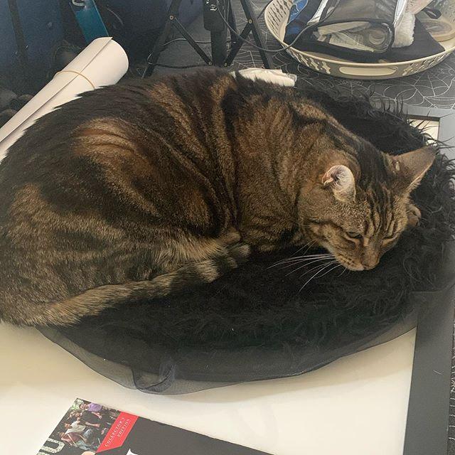 Witch hat ✅ - kitty ✅ - Where's my broom? @prajna_kitty  @dgallaty #kitty #witch #broom #catsofinstagram #prajna_kitty