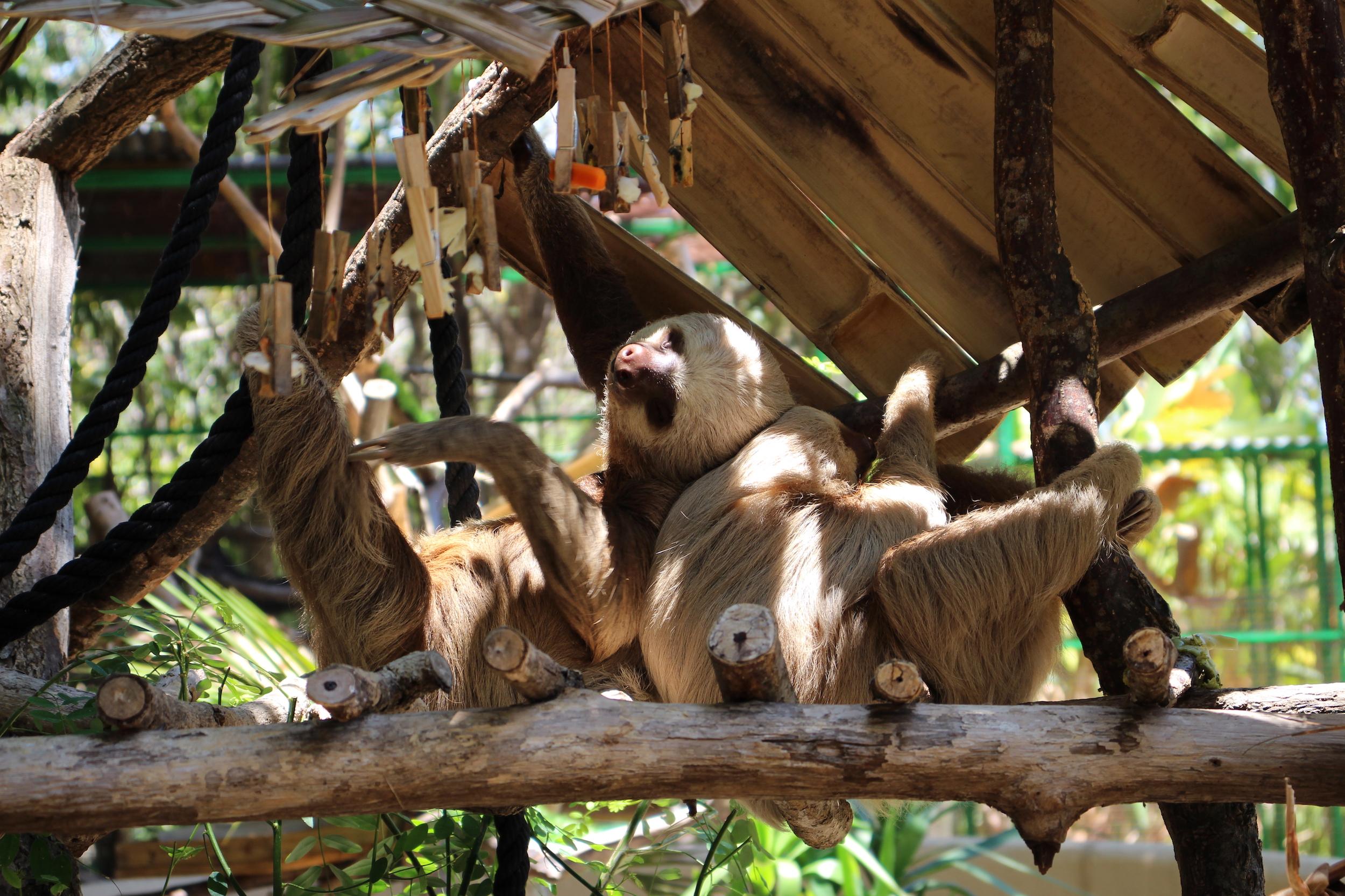 alturas_sloths.jpg
