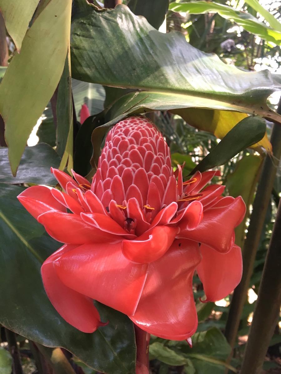 Lush jungle flora