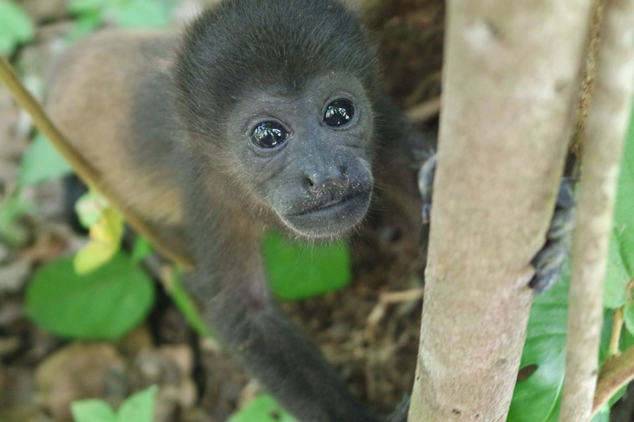 Wild Sun curious monkey