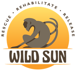wild sun logo-transparent-01 copy 2.png