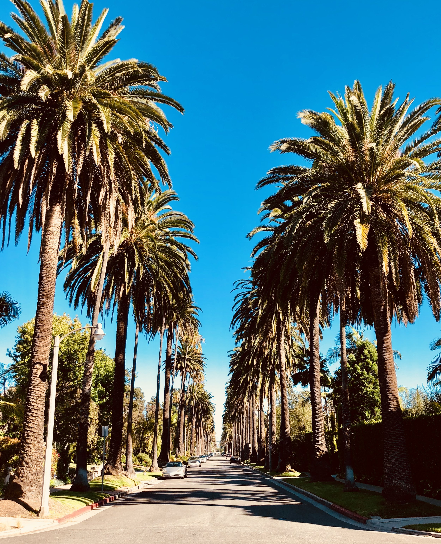 LA Any Day-27.jpg