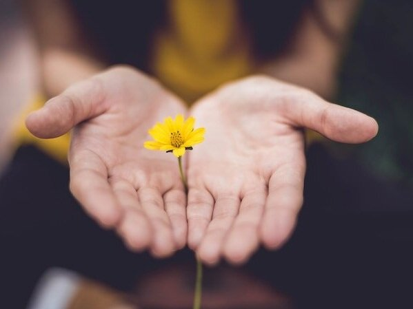 Identify your value image of yellow flower in hand